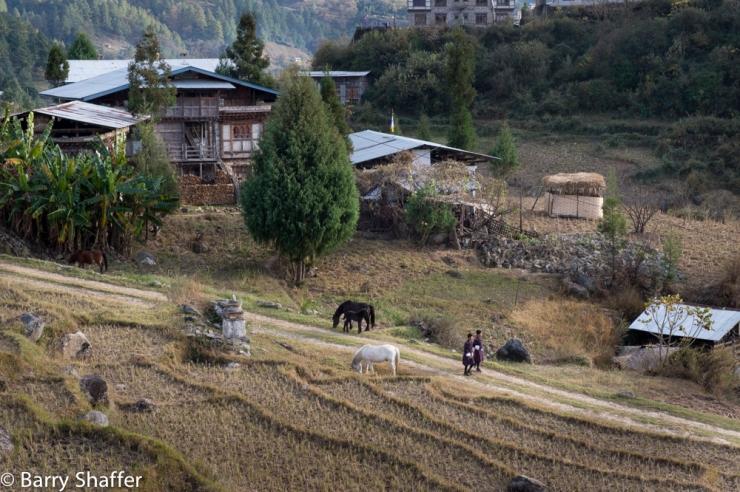 bhutan_posts-10